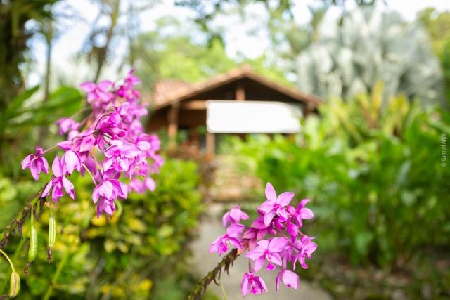 Flowers at Casa Marcellino Hotel in Cahuita