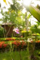 Flower at Casa Marcellino Hotel in Cahuita