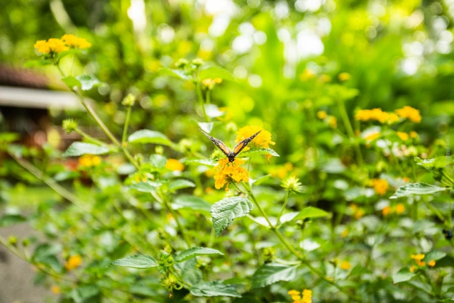 Butterfly at Casa Marcellino Hotel in Cahuita