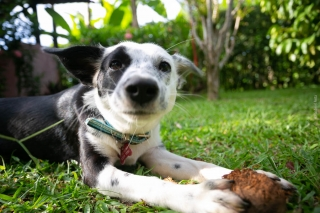 Dog at Casa Marcellino Hotel in Cahuita