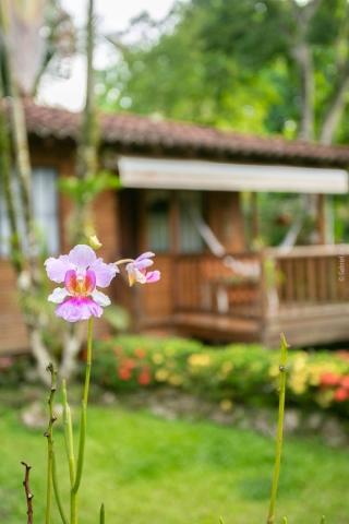 Orchids at Casa Marcellino Hotel in Cahuita Costa Rica